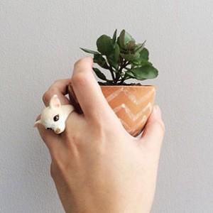 แหวนรูปหมาชิวาว่า