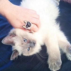 แหวนรูปแมว