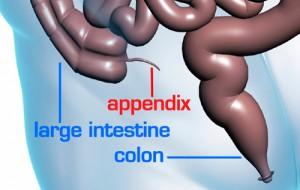 5-appendix