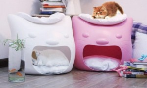 funny-cat-bed-and-stool-in-one-3-600x360