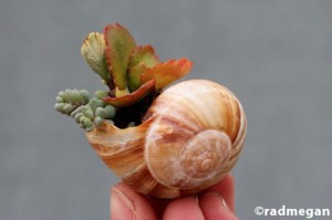 shell_pottedsucculents_1