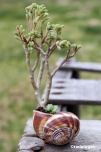 shell_pottedsucculents_4