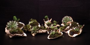 shells_with_accent_plants