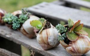 snail-shell-garden-megan-andersen2