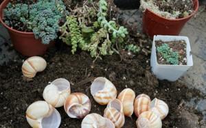 snail-shell-garden-megan-andersen3