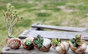 snail-shell-garden-megan-andersen4